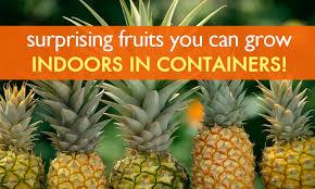 6 surprising fruits you can grow