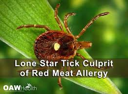 Lone Star Tick Culrpit of Red Meat Allergy