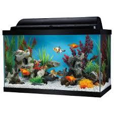 petsmart goldfish tank. Interesting Petsmart Top Fin 10 Gallon Goldfish Aquarium Starter Kit  PetSmart Throughout Petsmart Tank M