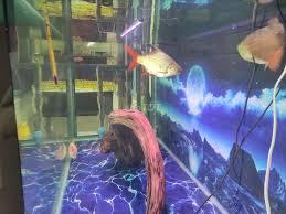 Đèn led cho hồ cá rồng , thủy sinh . - 87819516
