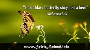 Butterfly Quotes Magnificent Butterfly Quotes