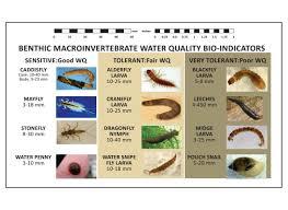 Macroinvertebrate Bioindicators Beaver Water District