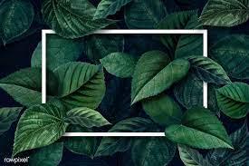 Leaf texture, Textured background ...