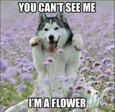funny-animal-memes-8.jpg via Relatably.com
