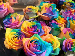 rainbow roses hd flowers wallpaper free