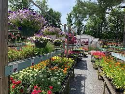 plant paradise this picturesque