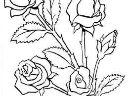 Disegni Di Fiori Da Colorare Dt54 Pineglen Con Rosa Disegno Per