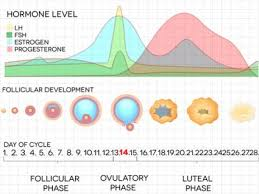 Period Cycle Pregnancy Chart 6 Signs Of Fertility And How To Use Them To Conceive
