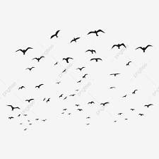 Creative Flying Birds Silhouette Illustration Abstract Birds