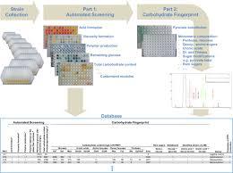 Flow Chart Of The Modular High Throughput Screening Platform The
