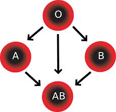 Resultado de imagem para tipos de sangue