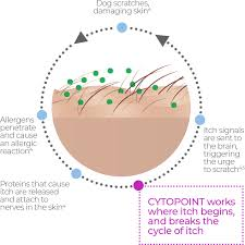 About CYTOPOINT® | CYTOPOINT®