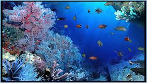 Tropical fish screensaver download
