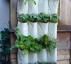 Vertical Kitchen Garden Vertical Vegetables Grow Up In A Small Garden And Confound The