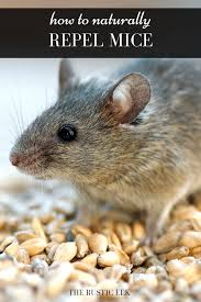 how to naturally repel mice pest