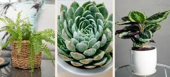 16 pet safe indoor plants flower power