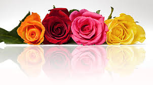 the color of roses and their meanings