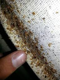 carpet mites. bat bugs in bedroom tiny brown on window sill black kitchen sink and bathroom view house carpet mites b