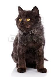 cute black cats with yellow eyes. Plain Cute Portrait Of Black Cat With Yellow Eyes A True Friend Kitten Cute Kitty To Cute Black Cats With Yellow Eyes W
