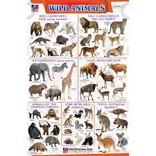 Chart No 19 Wild Animals