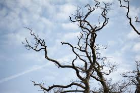 dead tree braches-2781
