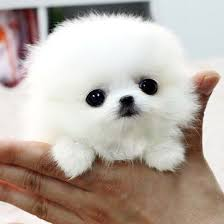 Back at Work and Stressed? Cute Baby Animal Ph</div></body></html>