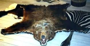 bear skin rug cost ideas grizzly or black for 8 x polar