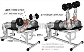 Bench Barbell Incline Bench Incline Barbell Bench Press Incline Bench Press Grip