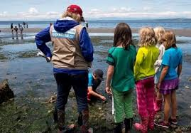 Your Guide To Exploring Seattle Area Beaches At Low Tide