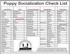 33 Best Puppy Socialization Training Images Puppy