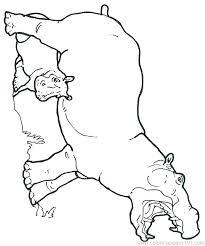 Hippopotamus Coloring Pages Hippopotamus Coloring Page Mural Hippo