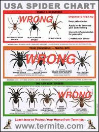Bug Girls Blog Spiders