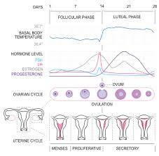 Charting Basal Body Temperature For Ovulation Pregnancy