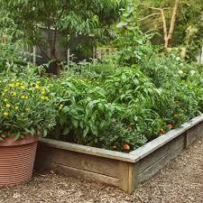vegetable garden ideas design