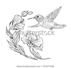 hummingbirds and flowers drawing. Unique Hummingbirds Hummingbirds And Flowers Black White Contour Drawing For And Flowers Drawing M