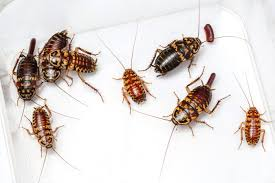 9 Great Ways To Deal With Baby Roaches Fast And Easy