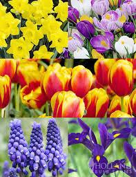 complete spring flower bulb garden