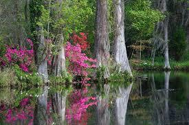 magnolia plantation cypress swamp charleston county south ina