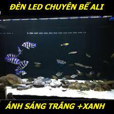 Đèn led cho bể cá ALI - siêu sáng mix màu xanh trắng (5 hàng led) - led cho  hồ cá ali - thủy sinh - Shop leo
