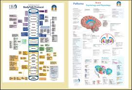 Bodytalk Protocol And Brain Chart Png