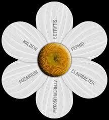 Uv Light To Kill Powdery Mildew Uv Garden Light Organically Kills And Prevents Mold And
