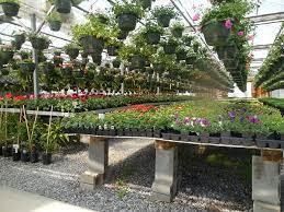 start your own plant nursery for profit