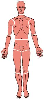 Free Trigger Point Chart The Trigger Point Referred Pain Guide