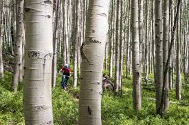 photo essay summer in crested butte co chasing epic mountain  photo essay summer in crested butte co