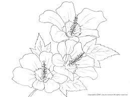ムクゲ槿の下絵夏の花のぬりえ