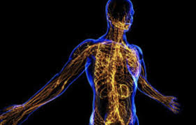 Image result for lymphatic system images