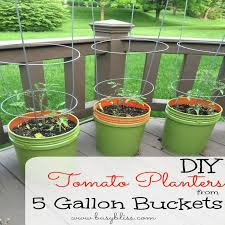 Innovative 5 Gallon Bucket Vegetable Garden 5 Gallon Bucket Vegetable  Garden Alices Garden