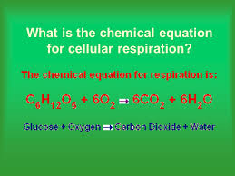 21 what is the chemical equation for cellular respiration