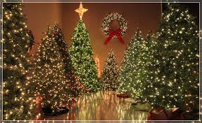 Christmas Lights, Etc Showroom