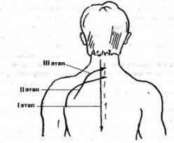 Массаж при остеохондрозе позвоночника Реферат Последовательность линейного массажа при остеохондрозе шейного отдела позвоночника